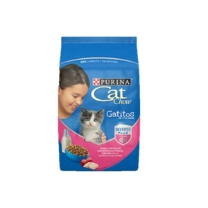 Cat show kitten